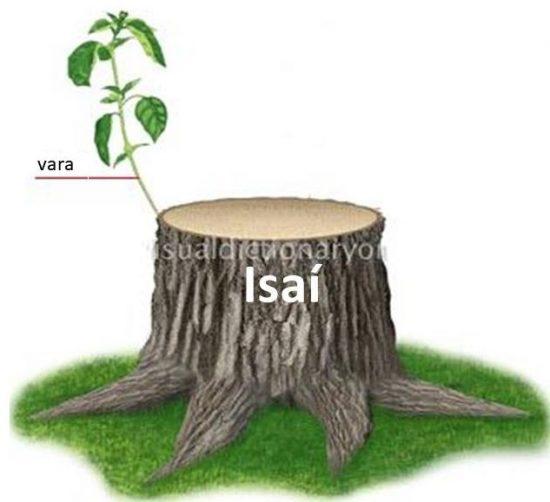 La vara del tronco muerto de Isaí